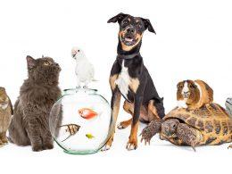 Who Keeps the Pet?