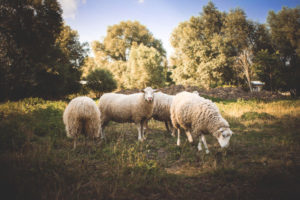 Stop Grazing for Help with Your Divorce